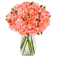 Heavenly Twelve Pink Carnations in Vase