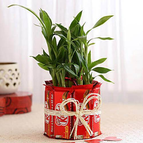 Exceptional Kitkat Arrangement with 2 Tier Lucky Bamboo Plant
