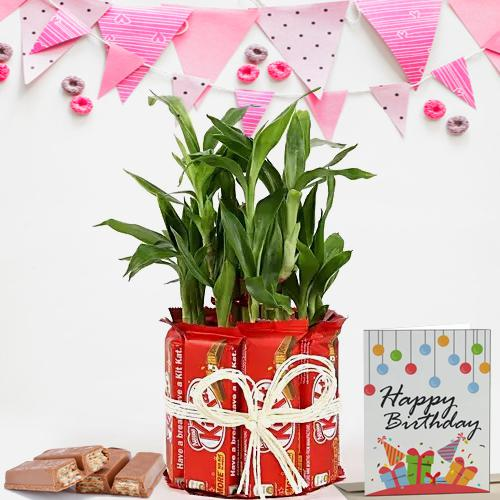 Wonderful Lucky Bamboo Plant with Kitkat Arrangement