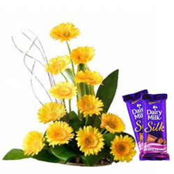 Classic Gift of Mixed Gerberas Bunch with Dairy Milk Silk