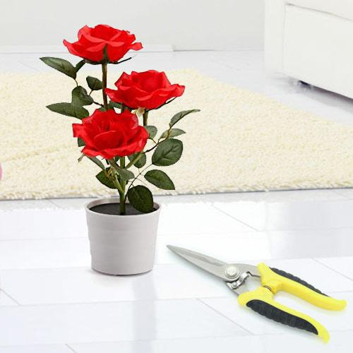 Eye-Catching Gift of Red Rose Plant with Pruning Scissor