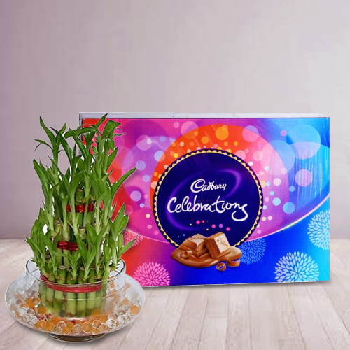 Breathtaking 2 Tier Lucky Bamboo Plant with Cadbury Celebrations Pack
