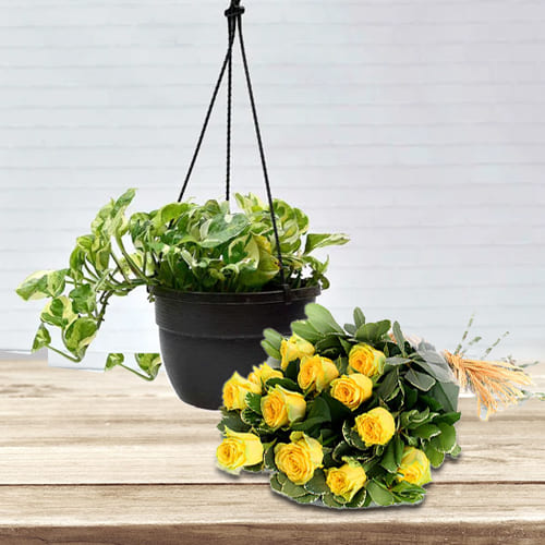 Blossoming Bunch of Yellow Color Roses with Hanging Money Plant