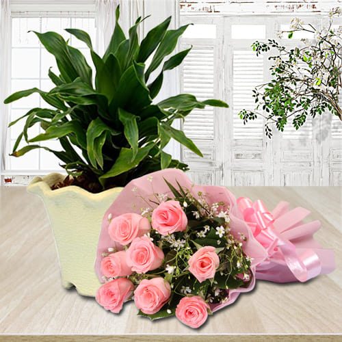 Elegant Pink Rose Bouquet with Dracaena Compacta Plant in Plastic Pot