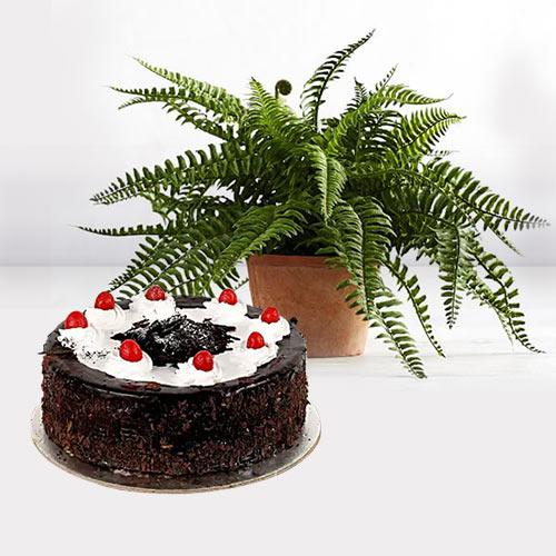Beautiful Gift of Indoor Air Purifier Plant with Cake